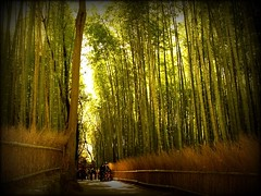 - Bamboo forest in Sagano, Japan (Hopeisland) Tags: trees plant green nature field japan forest spring kyoto grove bamboo bm april tall sagano 2010    bestofmonth bamboogrove  bestofthemonth   bestofmonthaward