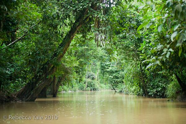 RYALE_Kinabatangan_River_17