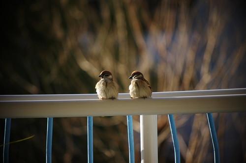small visitors