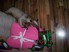 I see presents