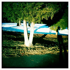 Tree 'N Me (laconchalibre) Tags: light sun snow tree green nature durham trunk tre iphonecamera