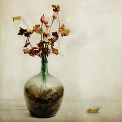 souvenirs (ixos) Tags: flowers texture fleurs square interestingness artwork memories explore souvenir layers carr ixos calques ceation texturesquared