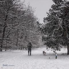 hard times III (GdeB fotografeert) Tags: winter drenthe ees boswachterijexloo wintersbeeld gdebfotografeert mygearandme mygearandmepremium mygearandmebronze januari2010 vakantieindrenthe barretijden
