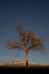 lone tree sunset last day of 2010 (johngpt) Tags: sunset newmexico tree alone albuquerque lastday landofenchantment sandiamountain efs1755mmf28isusm farewellto2010