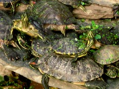 (Couche Tard) Tags: madrid vacation station train spain turtle pile tropical atocha ecosystem sunning