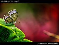 Innocent To This World /  (AmpamukA) Tags: world red baby green animal butterfly insect this leaf innocent newbie antennae        ampamuka doublyniceshot tripleniceshot