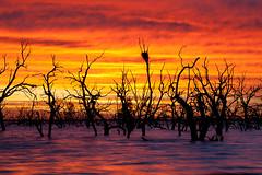 _MG_9368 (Wai Cheong Chan) Tags: pamamaroo lake sunrise landscape menindee andychan andy wai cheong chan