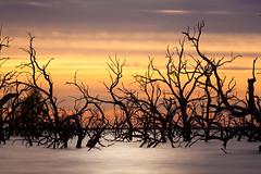 _MG_9409 (Wai Cheong Chan) Tags: pamamaroo lake sunrise landscape longexposure menindee andychan andy wai cheong chan