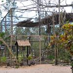 20101224 BZE Zoo_1116 new King Vulture enclosure.jpg thumbnail