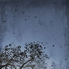 The Birds (Julie Rideout) Tags: tree birds dark moody blackbirds nikond200 texturesquared skeletalmesstextures julierideout