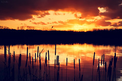 Sunset Story (Marc Benslahdine) Tags: light sunset sky orange lake reflection clouds jaune landscape rouge soleil