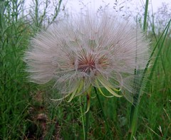 Wild and Precious. (Andesine) Tags: green nature beautiful grass for fairy your pointandshoot wildflowers lovely comment onawalk hanks