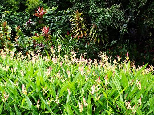 Hawaiian flowers DSCF0117_labeled