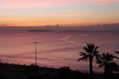 Mditerrane violette... (Sylvain Bretheau) Tags: mer color island riviera cannes violet ile couleur palmier azur matin iles mditerrane violette lerins
