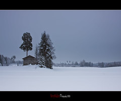 Familiar places (Barry_Madden) Tags: trees winter snow building tree barn forest suomi finland landscape countryside farmland explore talvi lappeenranta