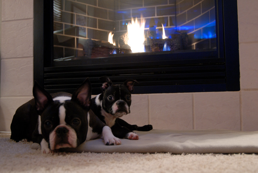 Fireplace snoozers