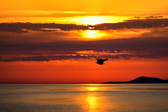 Gold (Theophilos) Tags: sea sky bird nature clouds sunrise crete rethymno