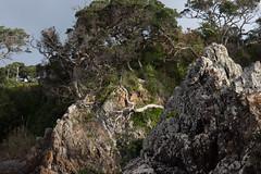Waiheke Island-5