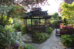 Pagoda  in late spring (Four Seasons Garden) Tags: four seasons garden uk england west midlands walsall spring 2016 japanese maples acers leaves azalea flowers