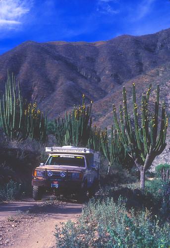 TIII-Baja-May90F02