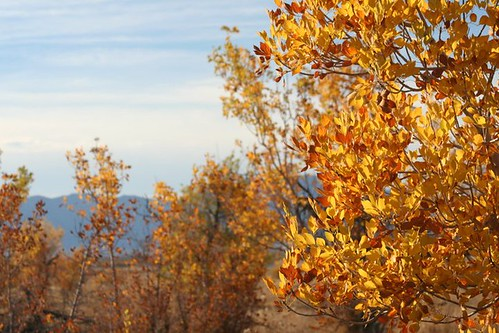 Fall Colors at Ash Meadows NWR