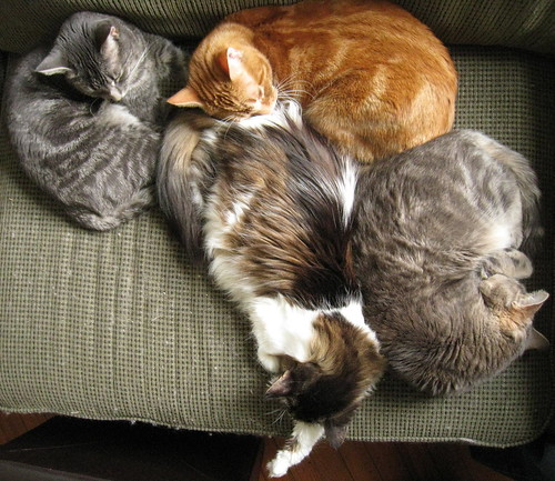 kitty pile up