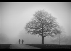 .... (Digital Diary........) Tags: trees blackandwhite bw mist cold fog landscape walkers chrisconway sherdleypark