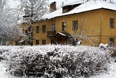 snow bush (Inna Makeenko) Tags: winter white snow cold russia oldbuilding