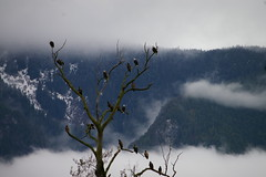 "eagles november 13 2010 010 • <a style=""font-size:0.8em;"" href=""http://www.flickr.com/photos/51193137@N08/5209456433/"" target=""_blank"">View on Flickr</a>"