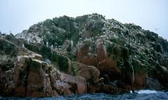 Islas Ballestas – Galapágy pro chudé