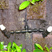Rainsystem upgrade - mid-wall nozzles