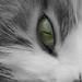Grüne Katzenaugen