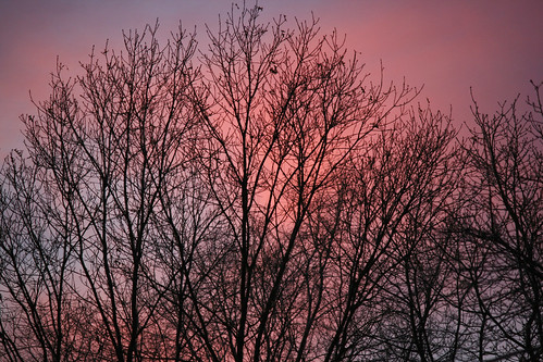 branches and purple