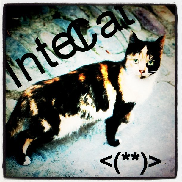 Just an intercat