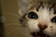 cook (kaleonel) Tags: cook karen gato gatinho leonel karenleonel kaleonel