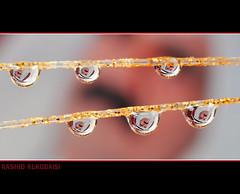 The National day of Qatar(18Dec)         (RASHID ALKUBAISI) Tags: 1971 drops 1982 nikon day drop dec bin national khalifa 28 1995 105 nikkor 18 fx 1977 hamad f28 vr doha qatar rashid the 2022  105mm     althani      18dec  105mmf28vr mywinners  alkubaisi  18 ralkubaisi wwwrashidalkubaisicom