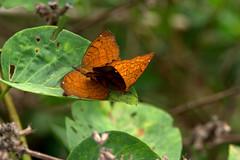 Srirangapatna 079.CR2