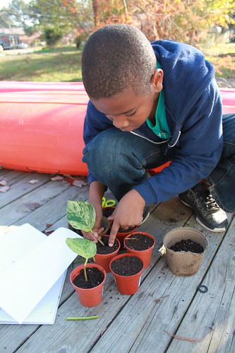 Tyrek's Science Fair 2010 - Planting