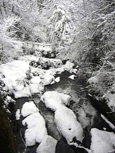 Frozen Water Scene