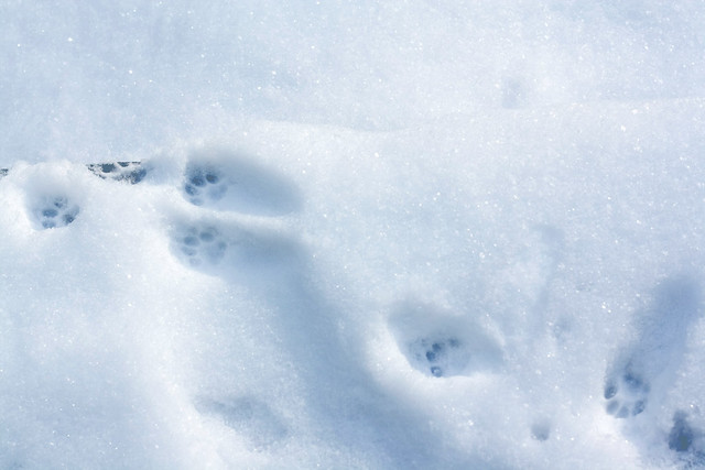 Day 100 - Paw Prints
