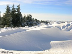 Hivers (Domi Rolland ) Tags: france nature canon europe neige blanc froid sapin 2010 aveyron midipyrnes bouloc