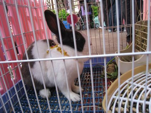 巧遇永康公園兔子認養活動