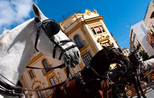 Sevilla 28