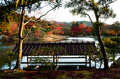 Kyoto-46.jpg (maurizio.mwg) Tags: travel autumn tree fall nature beauty japan temple nikon kyoto shrine gates fallcolors nippon tradition torii giappone d300 riyokan kikkor redleavs