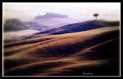 Senese (casaluna) Tags: italy tree nature landscape hill hills tuscany siena agriculture toscana paysage toscane arbre soe italie sienne toskana slopes collines senese stillnature platinumheartaward platinumpeaceaward bestcapturesaoi