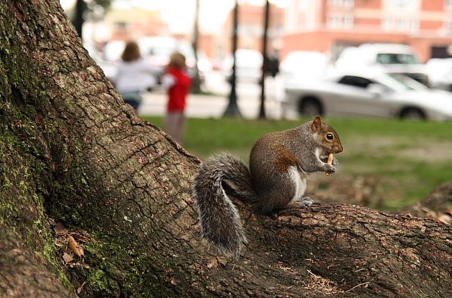 squirrelkids