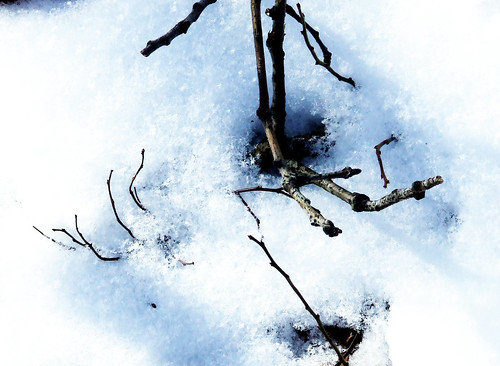 twigs in snow