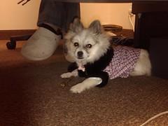Working Beside me! (lindseypinapfel) Tags: pets dogs marketing ibg globalmarketing lindseypinapfel
