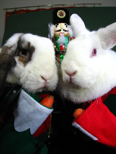 bunny christmas card picture 2010