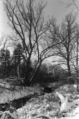 Winter creek 4 (hpulley) Tags: winter blackandwhite film waterloo expired ilforddelta400 canonftbn ilfotecddx ilfostop ilfordrapidfixer yellow8filter ilfotol canonfd35mmf2sscii